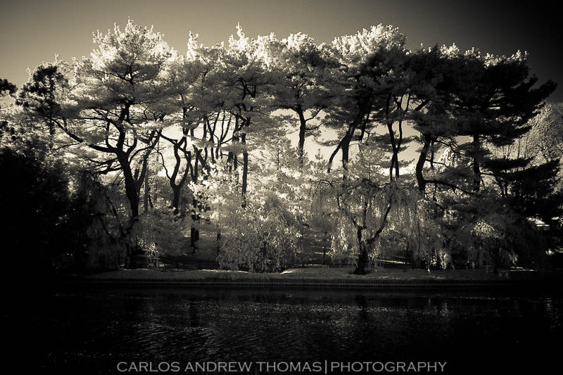 Brooklyn Botanical Garden in Infrared