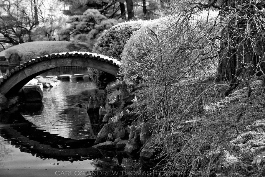 Japanese Garden-Brooklyn Botanical Garden in Infrared